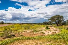 Afrikaanse savanne in bloei Royalty-vrije Stock Fotografie
