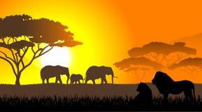 Afrikaanse savanne een avondlandschap royalty-vrije illustratie