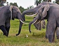 Afrikaanse savanne in Kenia Stock Fotografie