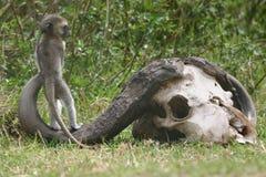 Afrikaanse Speelplaats Stock Afbeeldingen