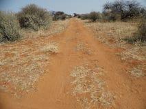 Afrikaanse struik stock afbeelding