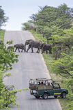 Afrikaanse struikolifant in het Nationale park van Kruger, Zuid-Afrika Stock Afbeelding