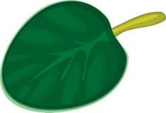 Afrikaanse Viooltjes (saintpaulia) Stock Foto