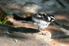 Afrikaanse vogel Royalty-vrije Stock Foto's