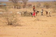 Afrikaanse vrouwelijke herder van de Samburu-stam een verwante Masai-stam in een nationaal kostuum die een troep van geiten hoede stock afbeelding