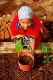 Afrikaanse vrouwelijke planter Royalty-vrije Stock Afbeelding