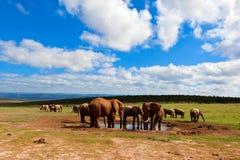 Afrikaanse waterholescène Stock Afbeeldingen