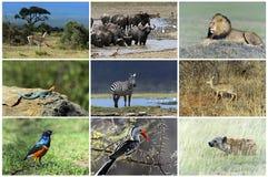 Afrikaanse wilde dieren Royalty-vrije Stock Foto's