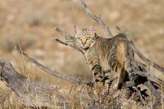 Afrikaanse wilde kat Royalty-vrije Stock Foto
