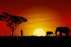 Afrikaanse Zonsondergang Stock Foto's