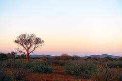 Afrikaanse Zonsondergang Stock Fotografie