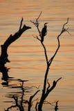 Afrikaanse Zonsondergang over Chobe Stock Foto