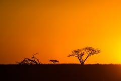 Afrikaanse Zonsondergang Zuid-Afrika Royalty-vrije Stock Foto's