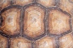 Afrikan sporrad sköldpadda på vit Fotografering för Bildbyråer