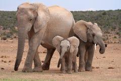 afrikanen behandla som ett barn elefanten royaltyfria foton