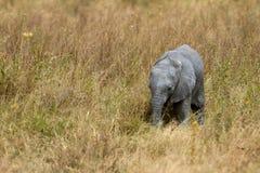 afrikanen behandla som ett barn elefanten Royaltyfria Bilder
