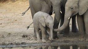 afrikanen behandla som ett barn elefanten