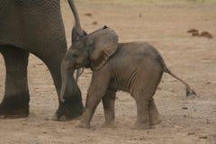 afrikanen behandla som ett barn elefanten Royaltyfri Bild