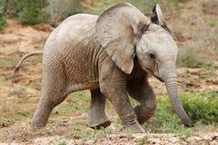 afrikanen behandla som ett barn elefanten royaltyfri fotografi