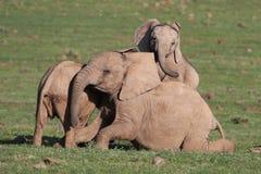 afrikanen behandla som ett barn elefantgyckel arkivfoto