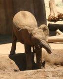 afrikanen behandla som ett barn svalnar av elefanten Arkivfoto