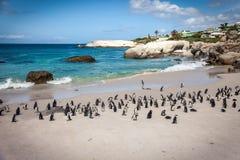 Afrikaner Penguinas auf Flussstein-Strand Lizenzfreie Stockfotos