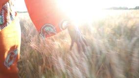 Afrikanerin in der traditionellen Kleidung gehend mit ihrer Hand auf einem Feld von Ernten bei Sonnenuntergang oder Sonnenaufgang stock video footage