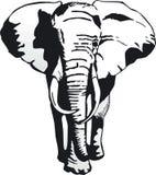 Afrikanisch di Elefant Fotografie Stock Libere da Diritti
