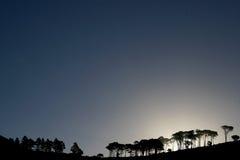Afrikanische Bäume Lizenzfreies Stockfoto