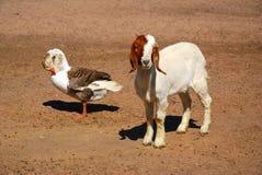 Afrikanische Bauernhofszene Lizenzfreie Stockfotografie