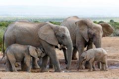 Afrikanische Buschelefant-Familienstruktur Lizenzfreie Stockfotografie