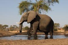Afrikanische Elefanten Lizenzfreie Stockbilder
