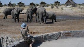 Afrikanische Elefanten, die in dem Wasserteich um touristische Häuschen erfassen stock video
