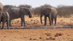 Afrikanische Elefanten an einem schlammigen waterhole stock footage