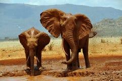 Afrikanische Elefanten an einem waterhole Lizenzfreie Stockfotos