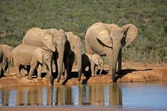 Afrikanische Elefanten am waterhole Lizenzfreie Stockfotos