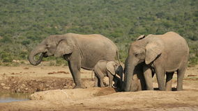 Afrikanische Elefanten am waterhole stock video