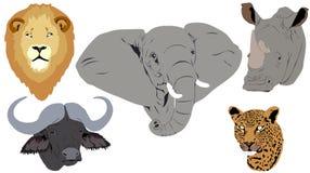 Afrikanische große fünf Köpfe Lizenzfreie Stockfotografie