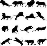 Afrikanische Löwen, asiatischer Löwe und Puma Stockfoto