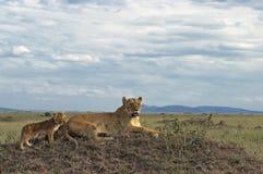Afrikanische Löwin mit Jungen Lizenzfreie Stockbilder