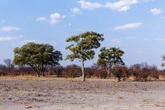 Afrikanische Landschaft Stockfotografie