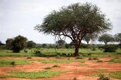 Afrikanische Landschaft Lizenzfreie Stockfotografie
