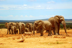 Afrikanische Landschaft Lizenzfreie Stockfotos