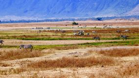 Afrikanische Landschaft lizenzfreie stockbilder