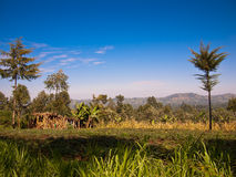 Afrikanische Landschaft mit einer Baumgruppe  Stockfoto
