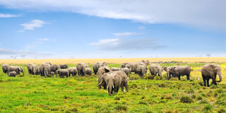 Afrikanische Landschaft mit Elefanten Stockbild