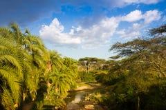 Afrikanische Landschaft mit Fluss und Palme stockbild