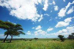 Afrikanische LandschaftTarangire Nationalpark Lizenzfreies Stockfoto