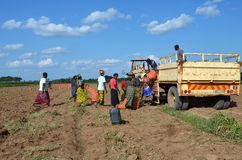 Afrikanische Landwirte Lizenzfreies Stockfoto