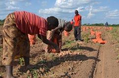Afrikanische Landwirte Stockfoto